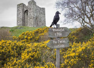 Image of a raven near a castle