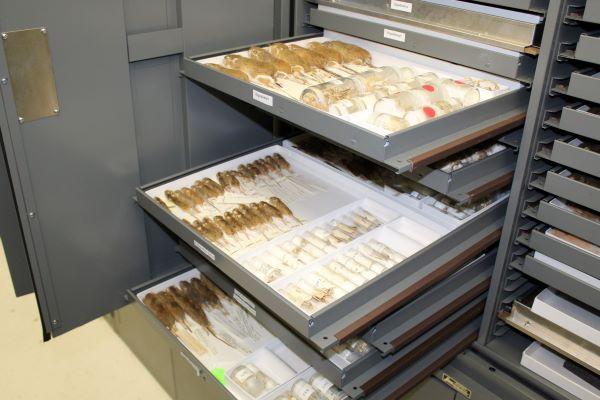 mammal specimens