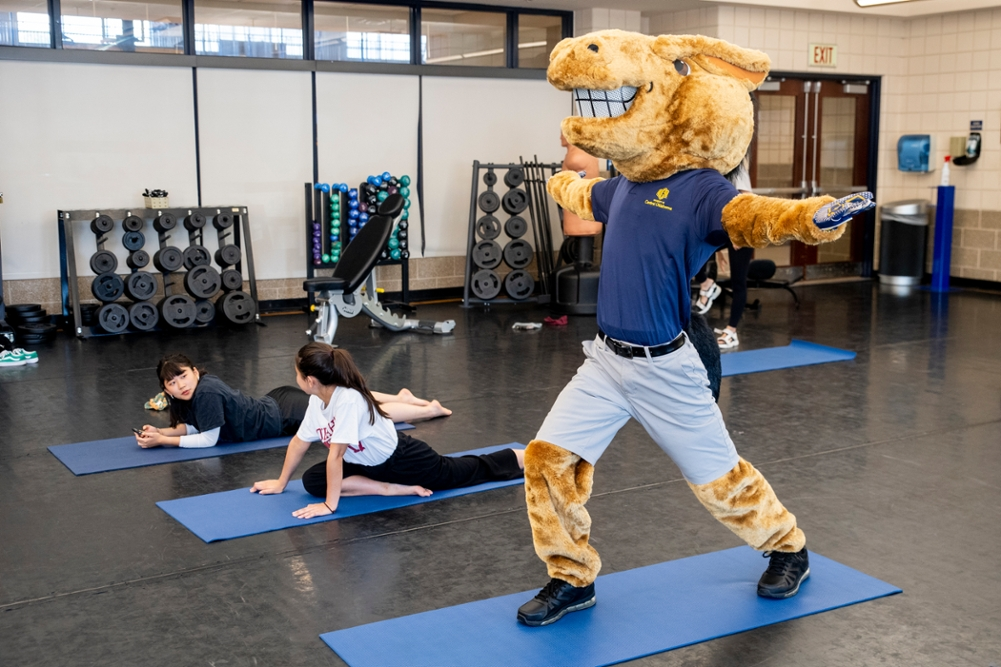 Buddy the Broncho doing yoga