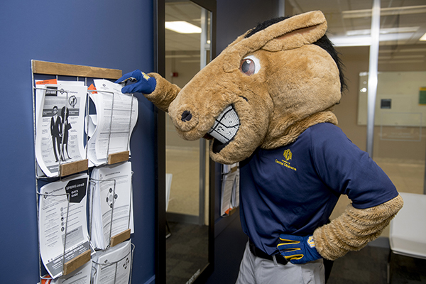buddy broncho looking at flyers about professional dress